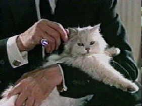 Блофелд с котом.